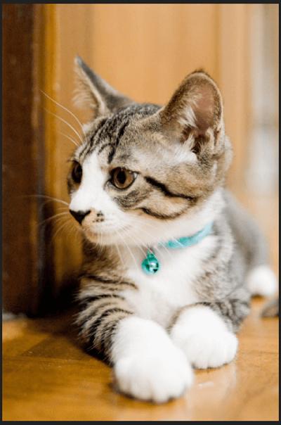 TinyPNG 画質変化 「猫」圧縮前